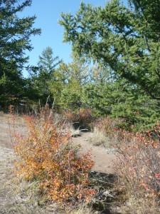 couleurs d'automne sur l'île d'Olkhone