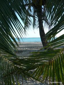 palmiers-entrelaces-polynesie
