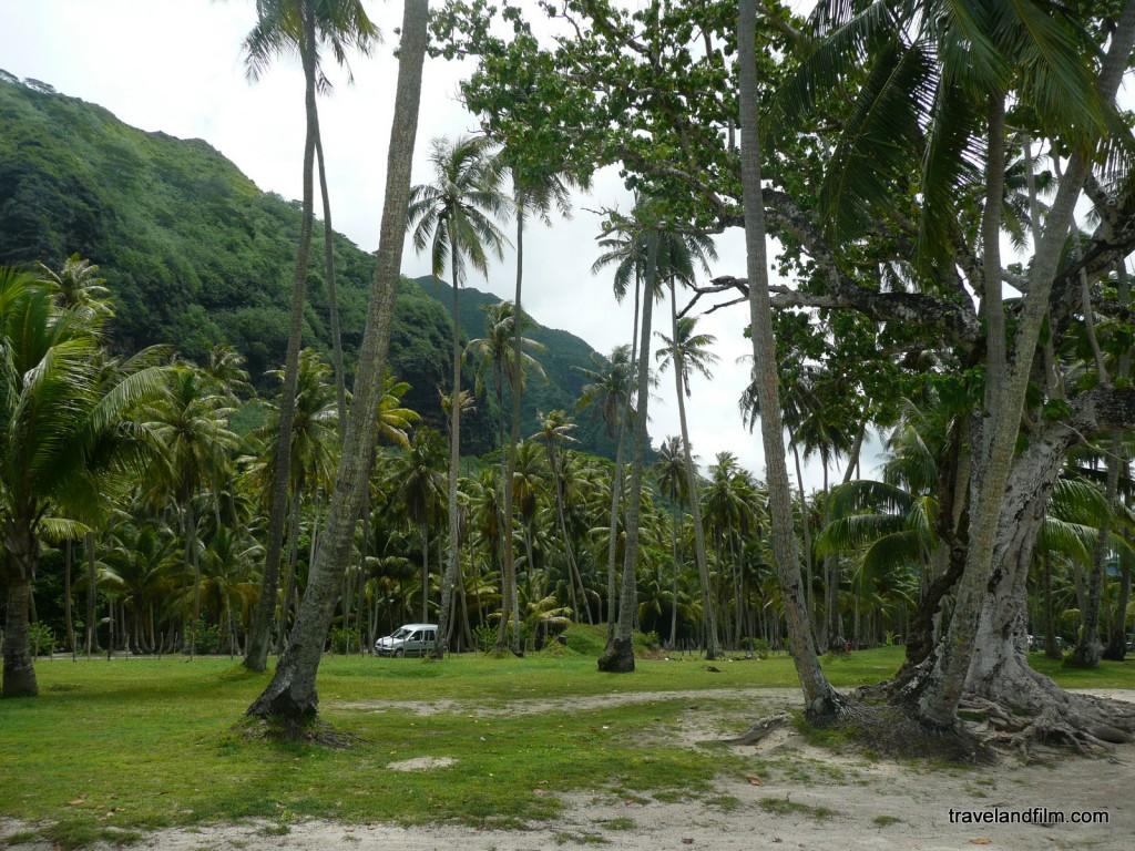 palmiers-ile-moorea