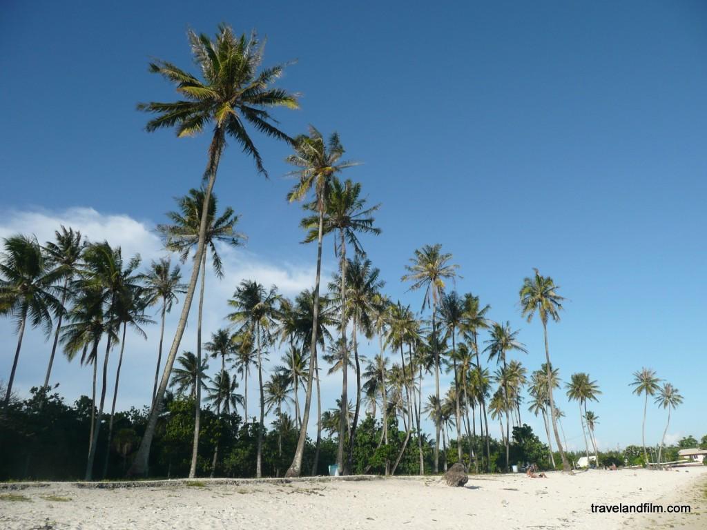 palmiers-polynesie-francaise