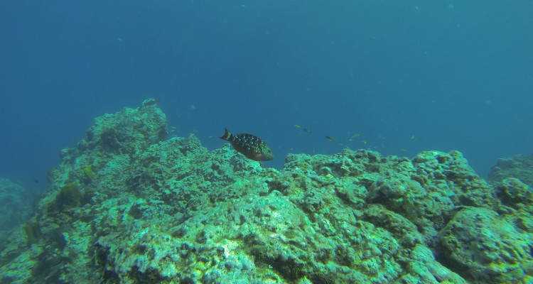 reserve-cousteau-guadeloupe