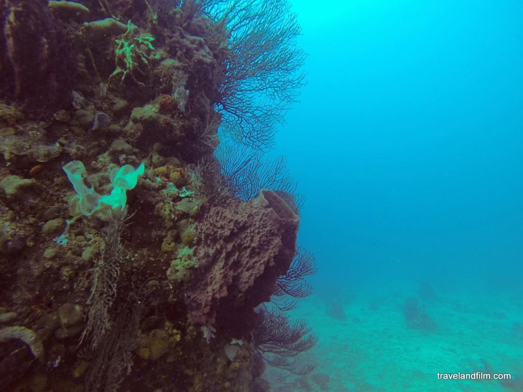 guadeloupe-coraux