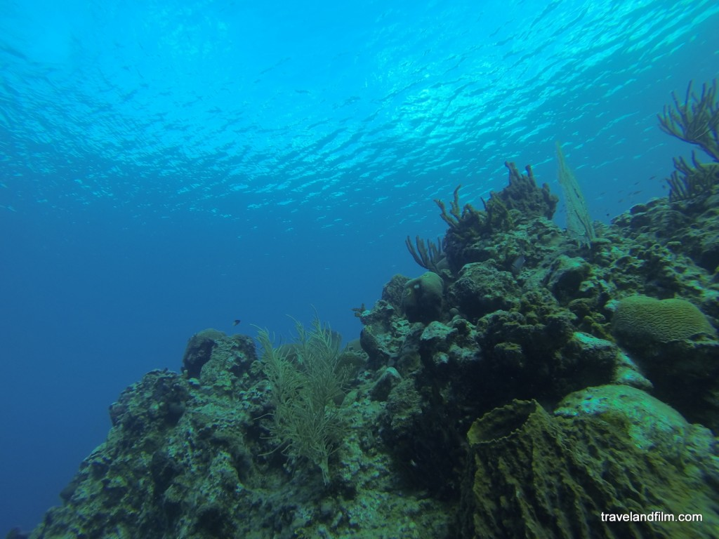 plongee-malendure-guadeloupe