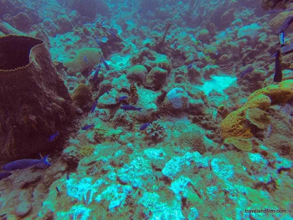 poissons-bleux-plongee.