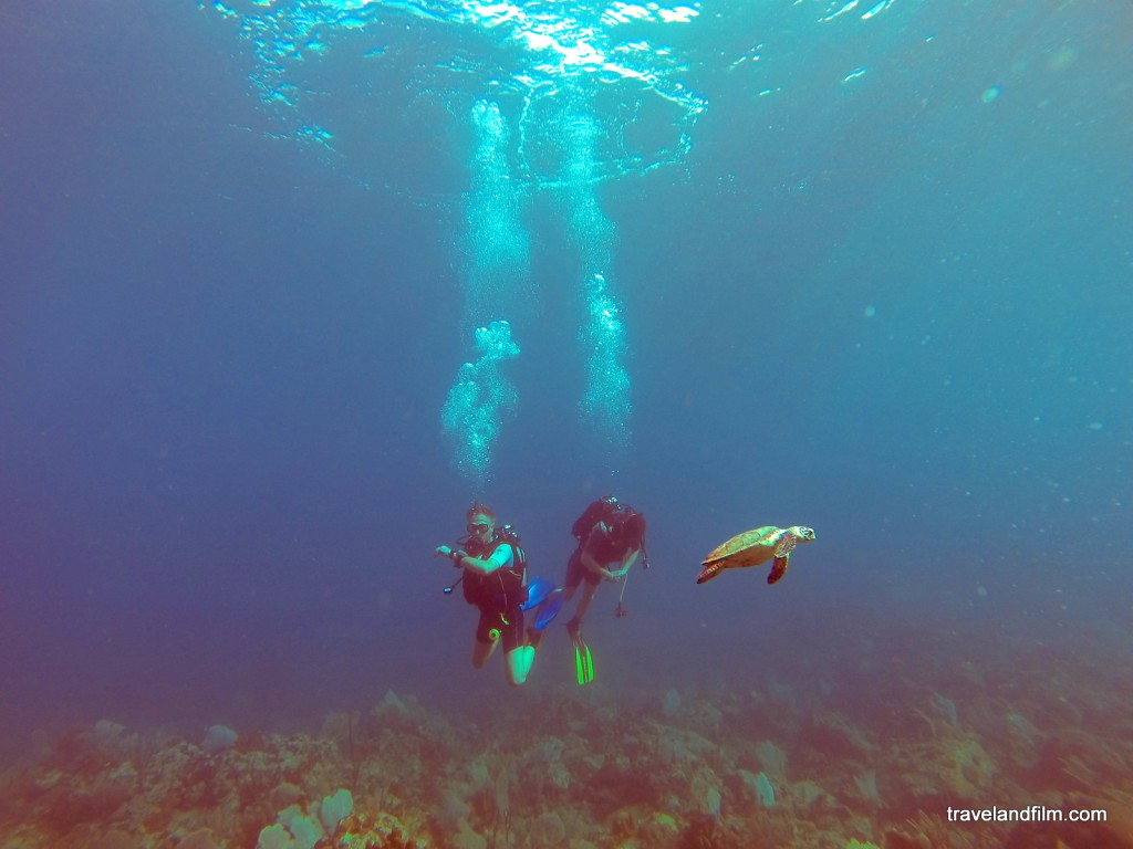 tortue-pointe-malendure-plongee