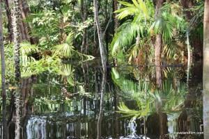 foret-inondee-amazonie