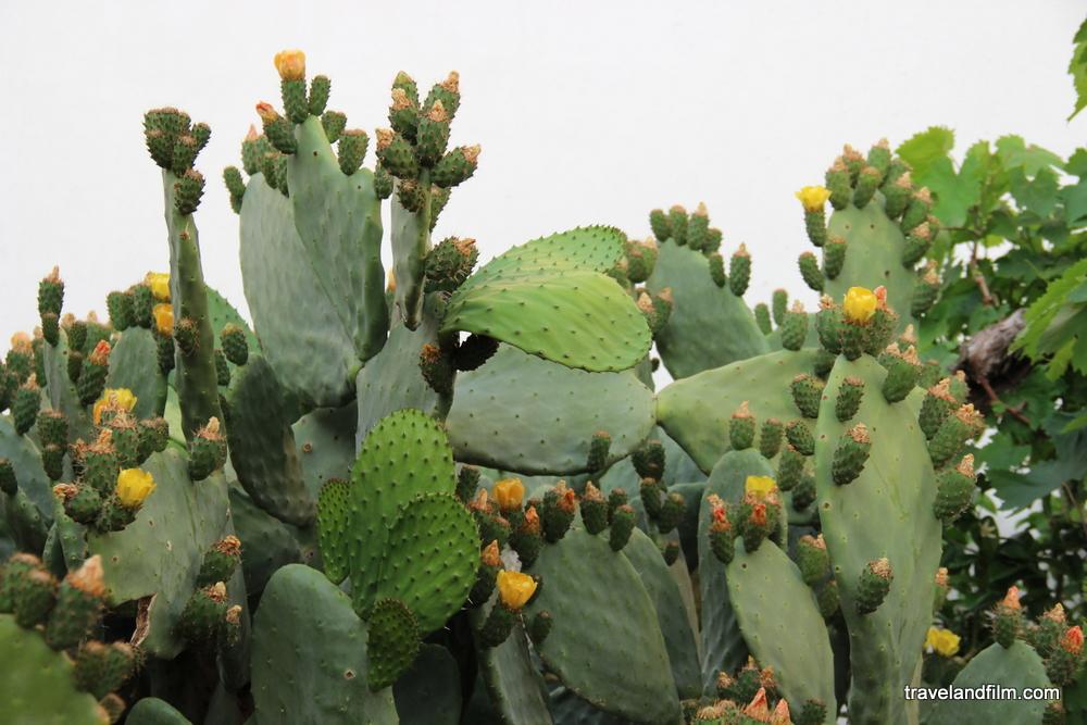 bahrein-pavilion-expo-milan-cactus