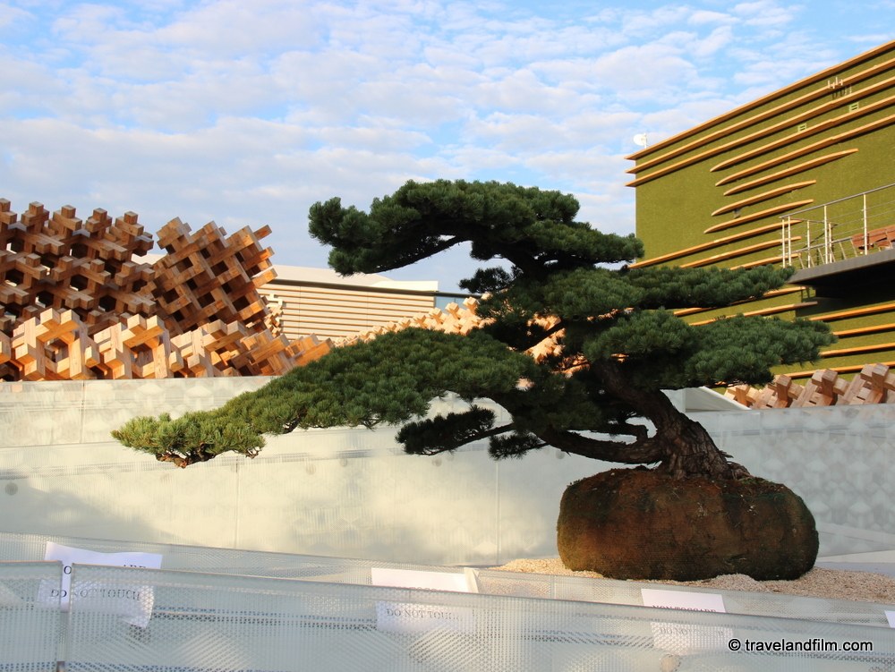 bonsai-pavillon-japon