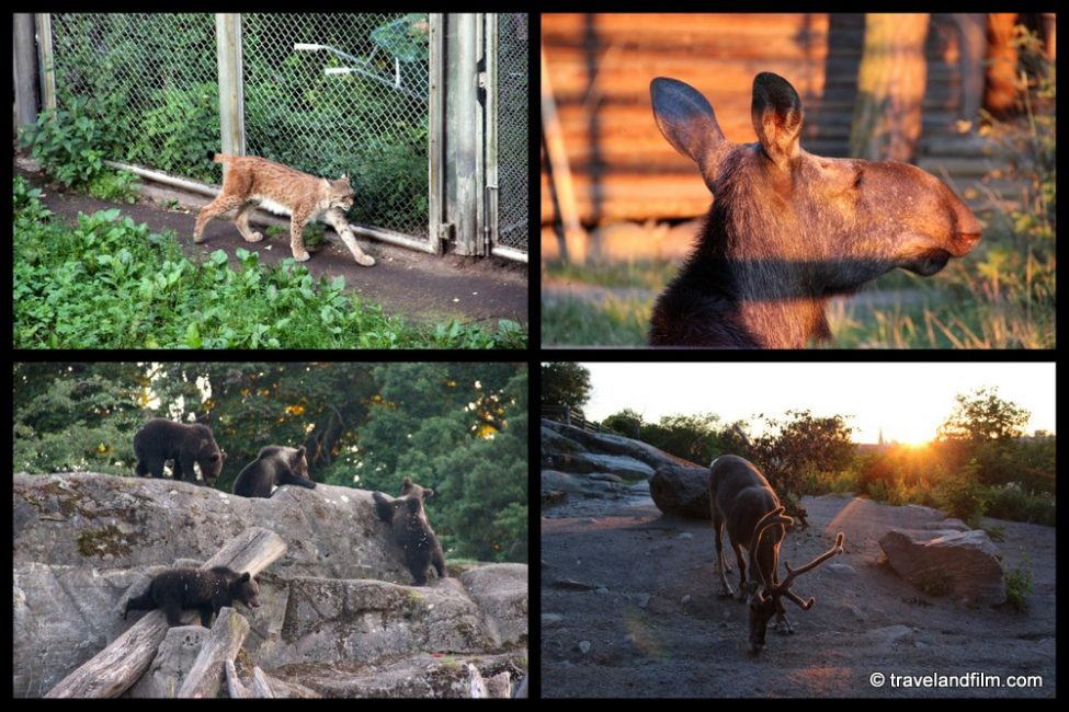 skansen-stockholm-animaux-sauvages-scandinaves