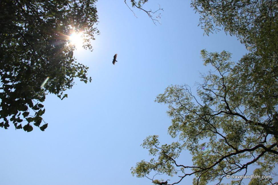 pantanal-ciel