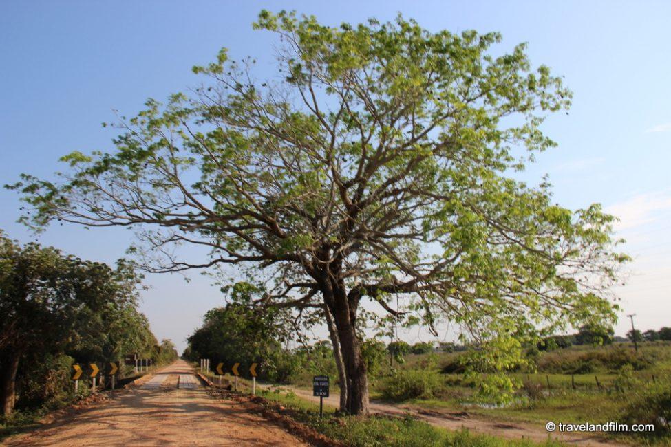 route-pantanal