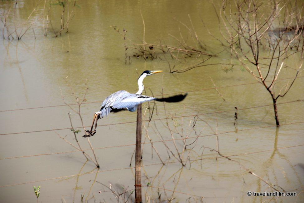 visiter-le-pantanal-au-bresil