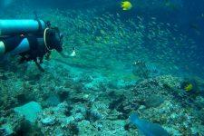 Plonger à Koh Phi Phi dans un univers sous-marin fantastique