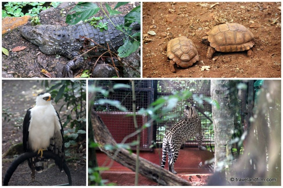 puerto-iguazu-argentine-guira-oga-animaux