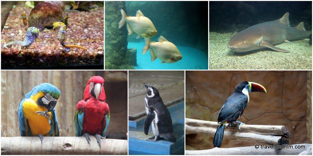 aquarium-natal-bresil
