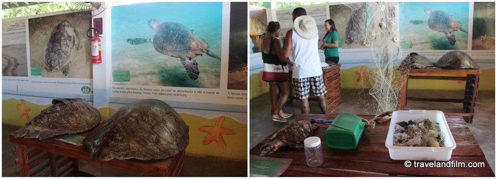 musee-des-tortues-ecoassociados-porto-de-galinhas