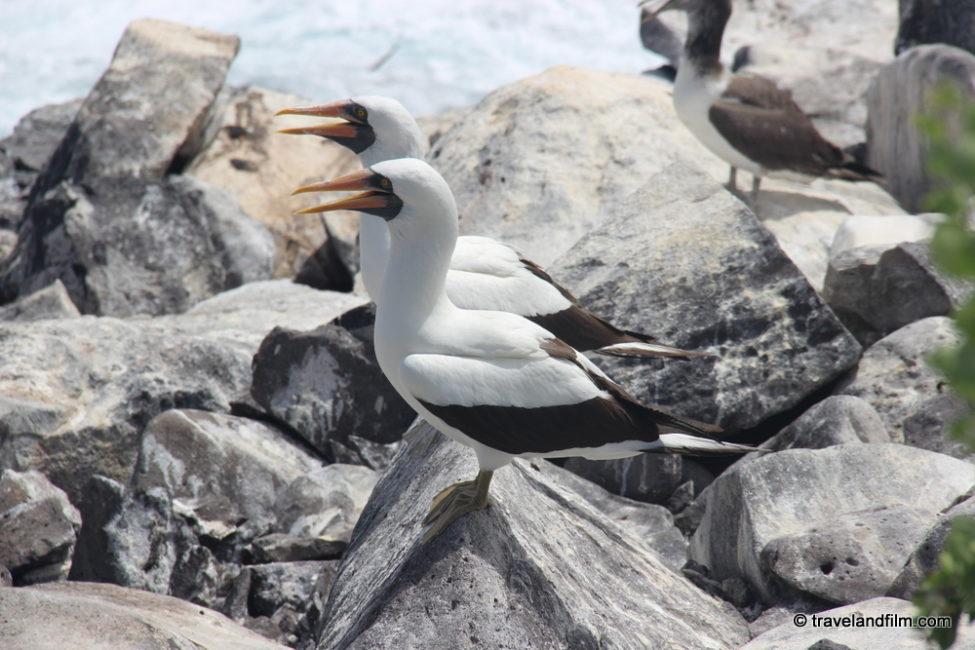 birds-isla-espanola-galapagos