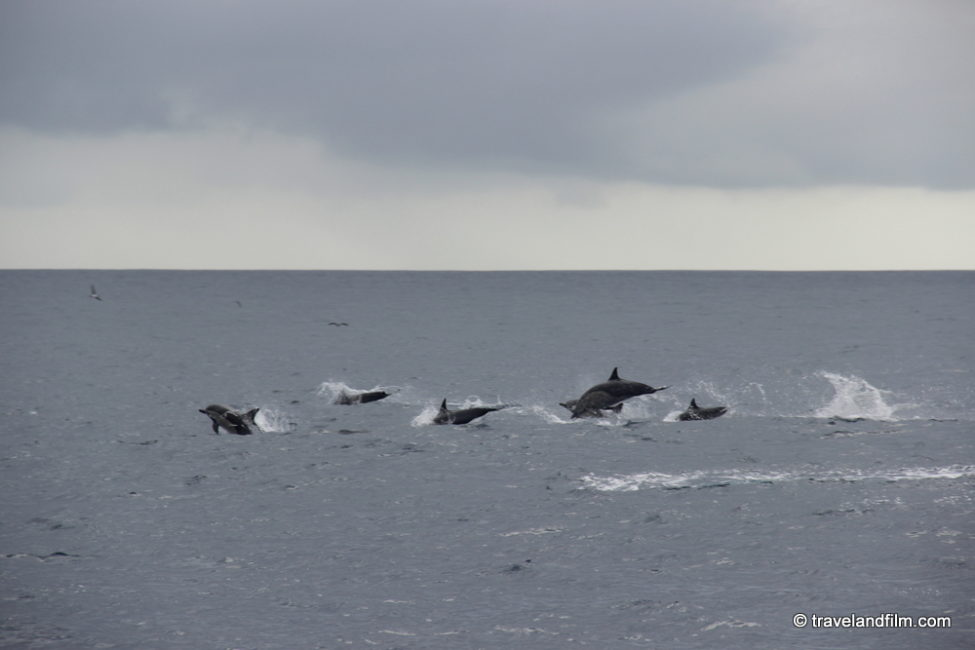 dauphins-galapagos