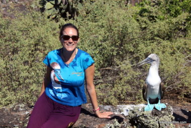 fou-pieds-bleus-galapagos