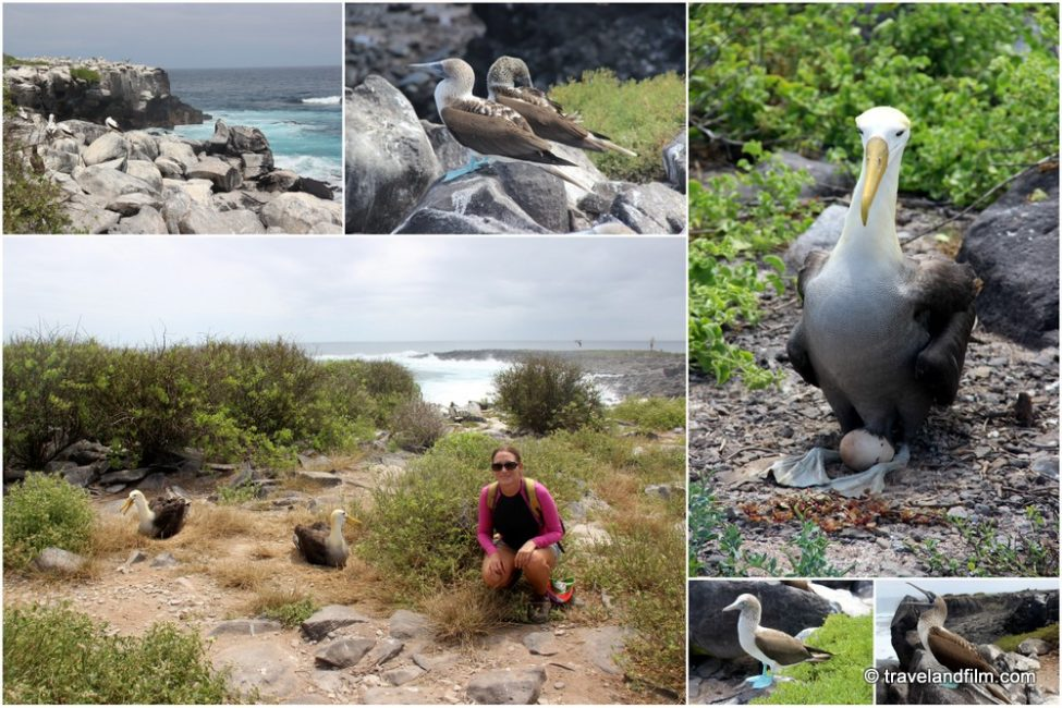isla-espanola-galapagos-oiseaux