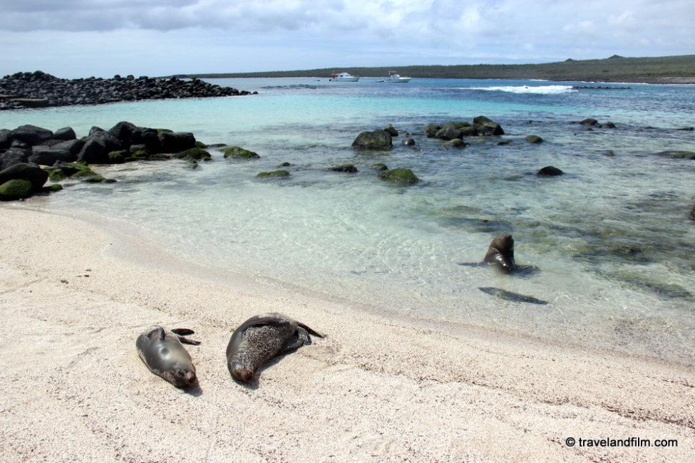loberia-plage-san-cristobal-galapagos