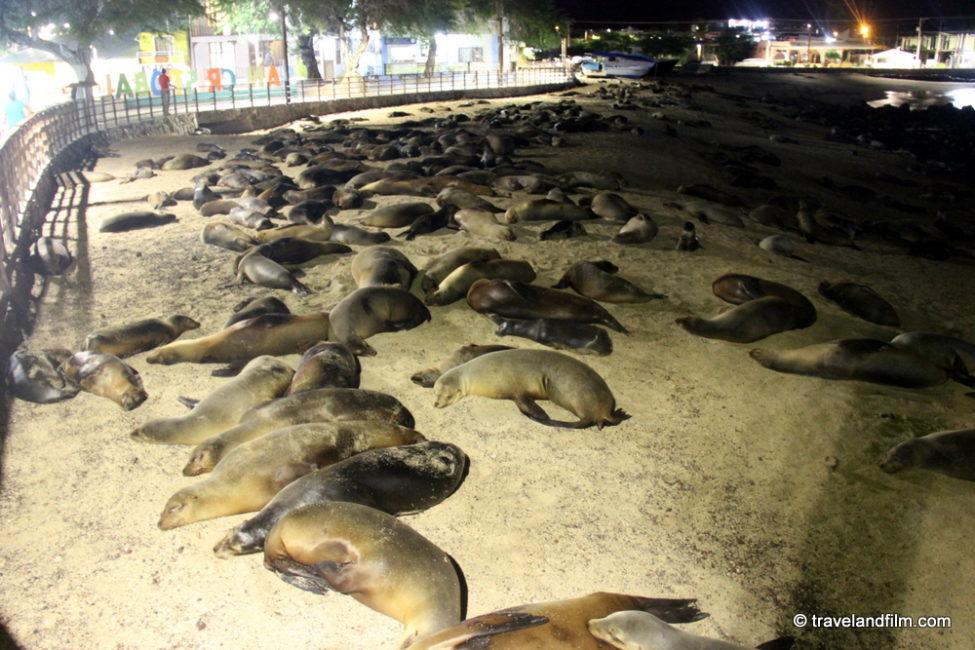 plage-san-cristobal-galapagos-otaries