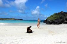 Visiter San Cristobal aux Galapagos, l'île des otaries
