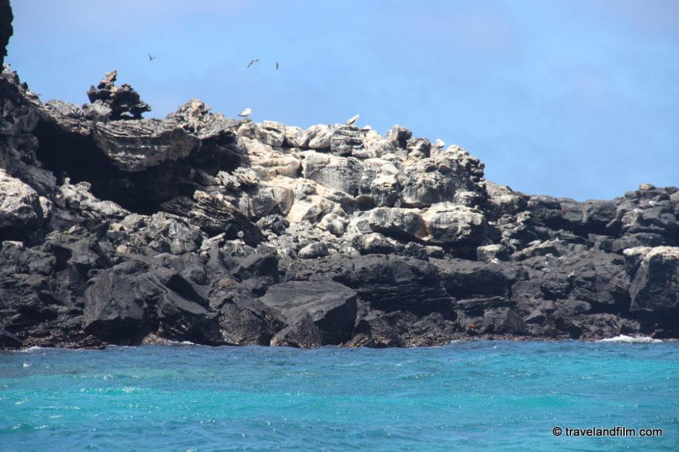 punta-pitt-san-cristobal-galapagos