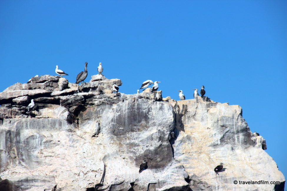 rocher-oiseaux-galapagos