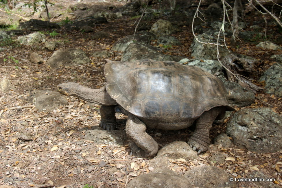 tortuga-galapagos-san-cristobal