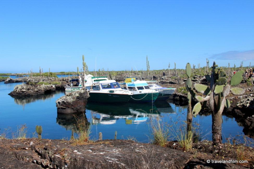 tours-bateau-isabela-galapagos