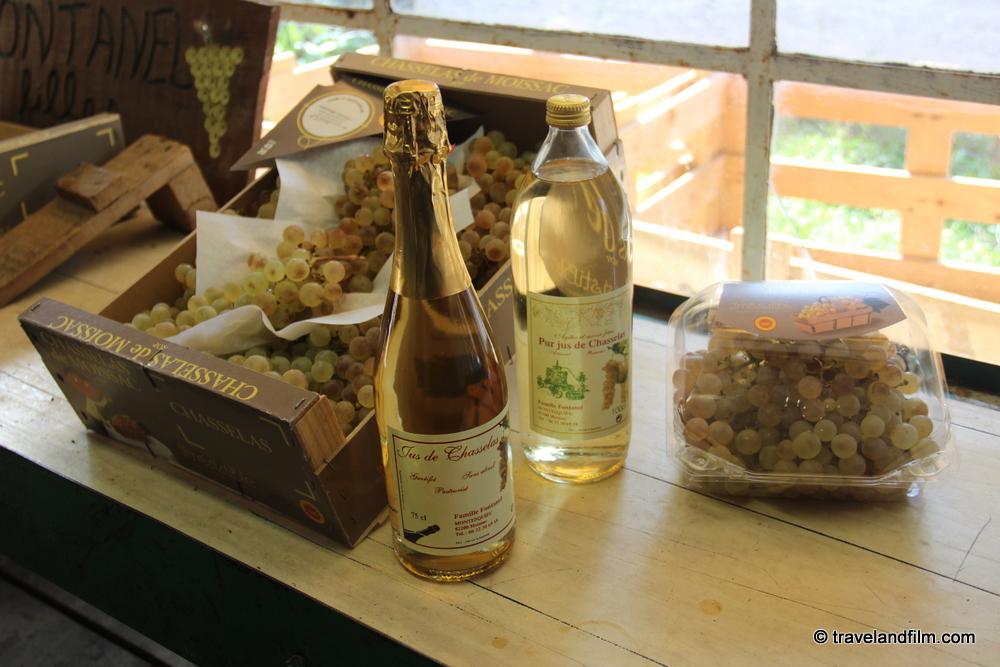 raisin-chasselas-tarn-et-garonne