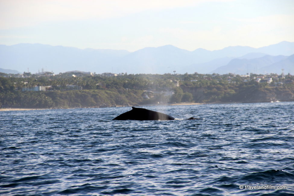 baleines-mexique