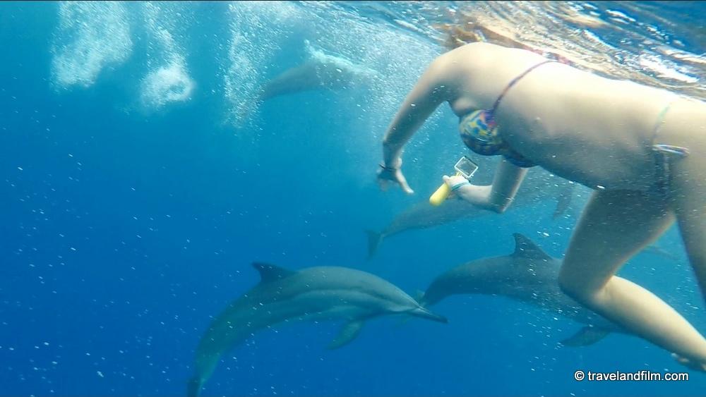 nager-avec-dauphins-hawai
