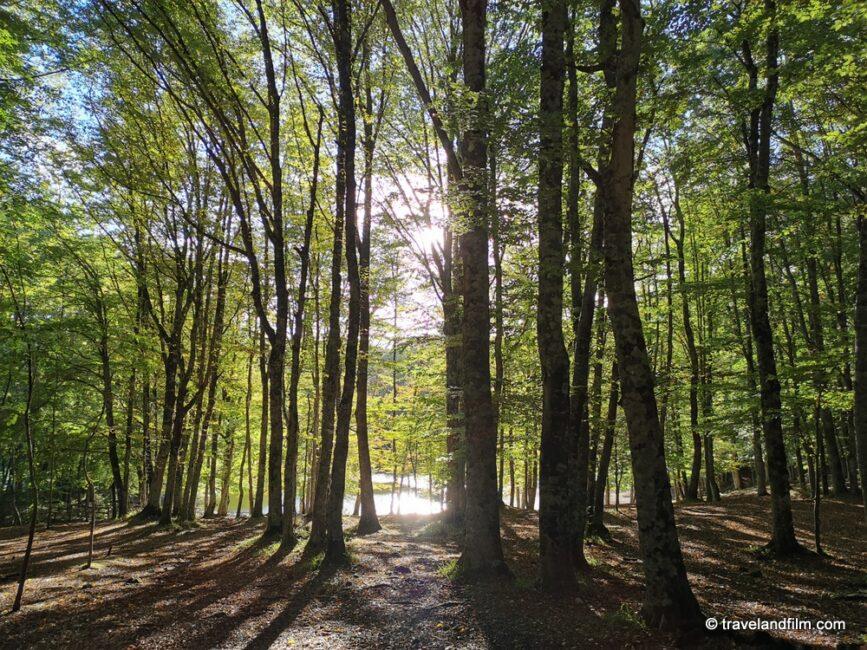 foresta-umbra-gargano-puglia
